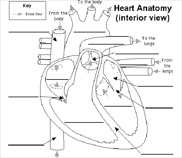 Heart Diagram – 15+ Free Printable Word, Excel, Eps, Psd Template