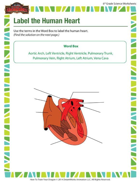Human Heart Worksheet – 6th Grade Science Printable – Sod