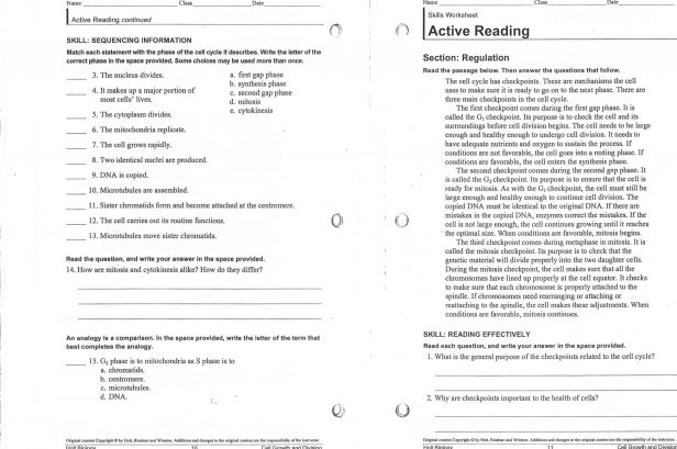Worksheet  Mitosis Worksheet And Diagram Identification Answers