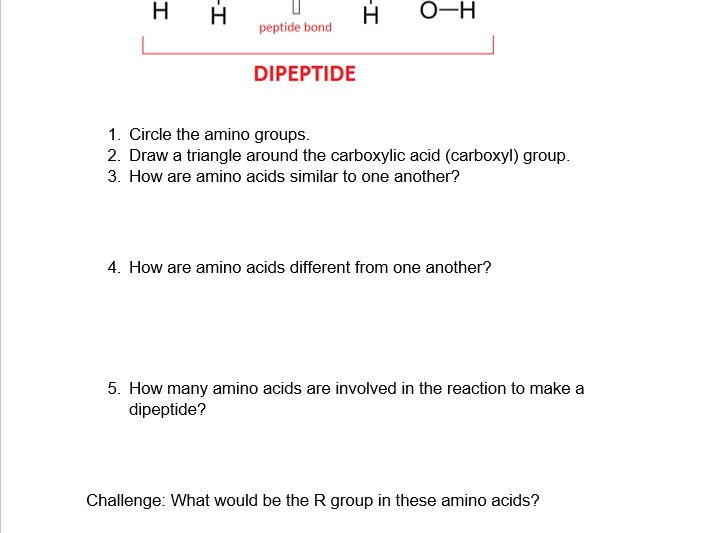 Protein And Lipid Worksheet By Dblackford