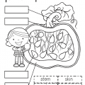 Label Pumpkin Parts Worksheets