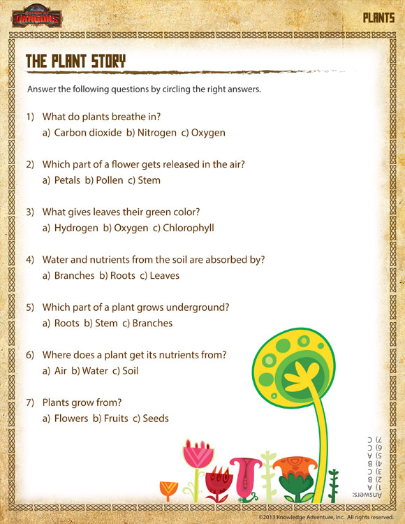 The Plant Story View – Printable Plant Worksheet 1st Grade – Sod
