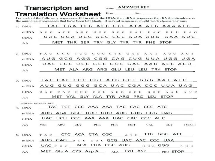Transcription And Translation Worksheet Answers