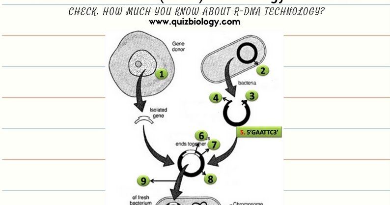 Recombinant Dna Technology Worksheet