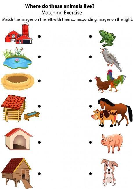 Good Morning Show!  Animal Houses!