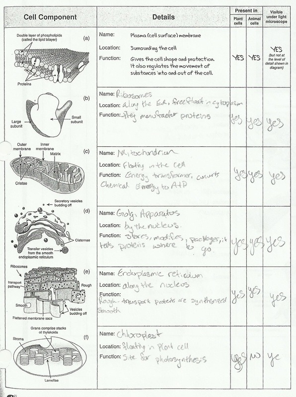 Printables  Cell Structure Worksheet  Lemonlilyfestival Worksheets