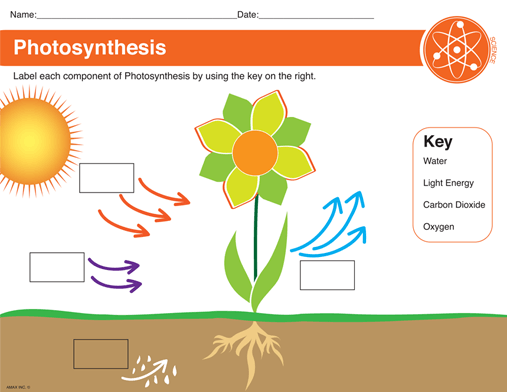 Image Result For Label Photosynthesis