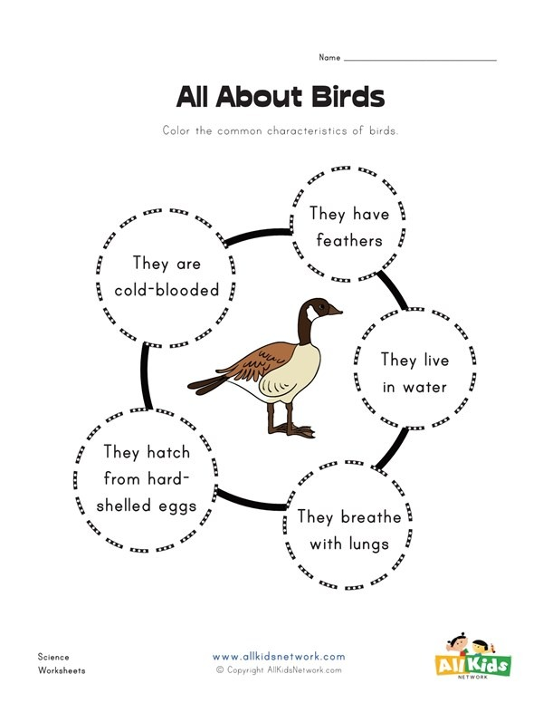 All About Birds Worksheet
