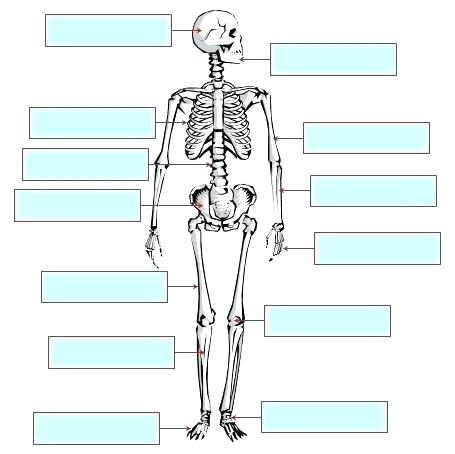 Anatomy Labeling Worksheets Frog Anatomy Review Labeling Heart