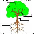 Parts Of A Tree Worksheets For Kindergarten