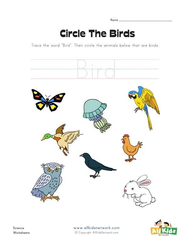 Circle The Birds Worksheet