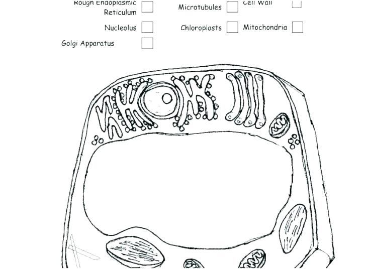 Cell Membrane Coloring Worksheet Biology Junction Answers