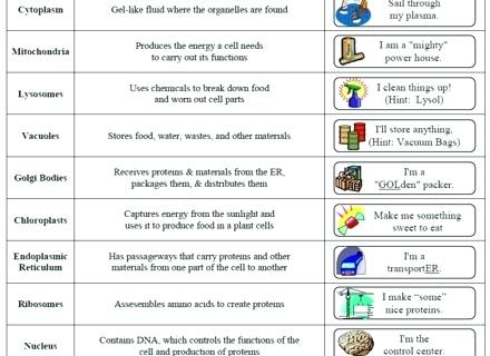 Cells And Organelles Worksheet Answer Key 5th Grade Math
