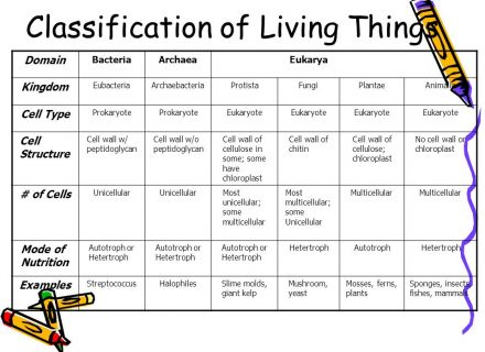 Classification Living Things Worksheets Worksheets For All