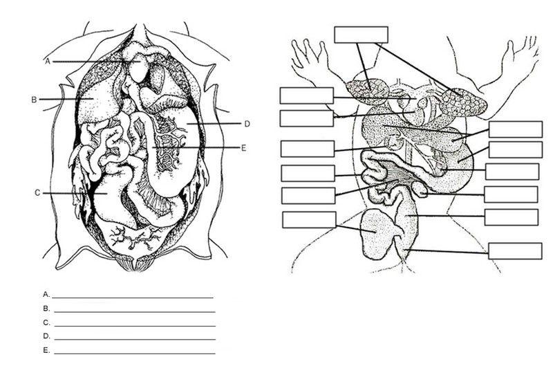 Frog Anatomy Labeling Worksheet