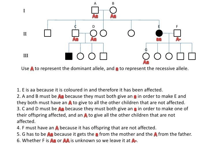 14 Rational Simple Pedigree Worksheet