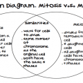 Mitosis And Meiosis Comparison Worksheets