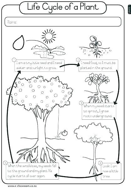 Free Printable Plant Worksheets Kindergarten Free Habitat