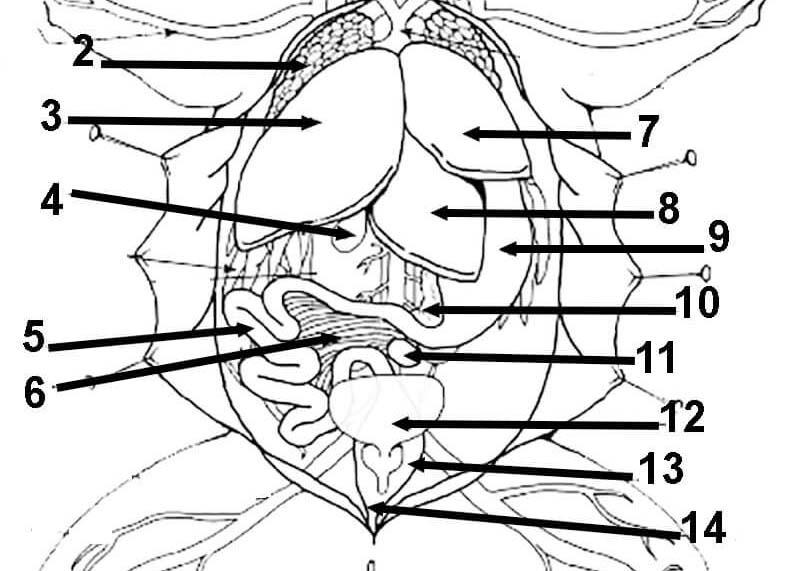 Frog Anatomy Coloring Worksheet