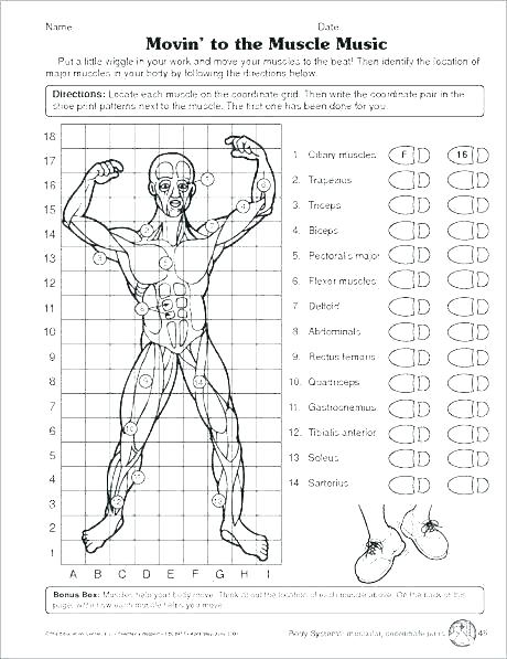 Human Body Systems For Kids Worksheets Free Human Body Systems