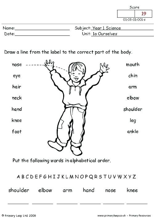 Human Body Worksheets For First Grade Parts Of The Body Worksheet