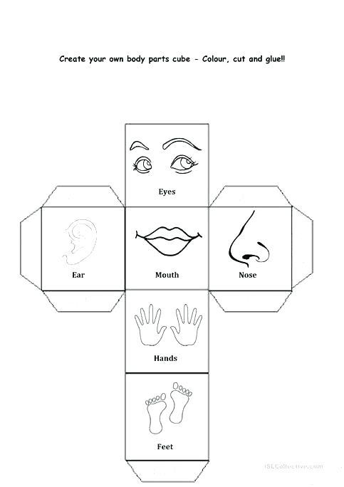 Kindergarten Body Worksheets Free Human Body Worksheets For