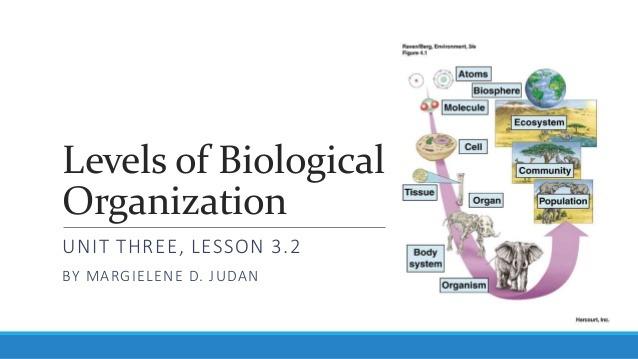 Levels Of Biological Organization Worksheet