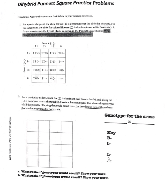 Solved  Dihybrid Punnett Square Practice Problems Directio