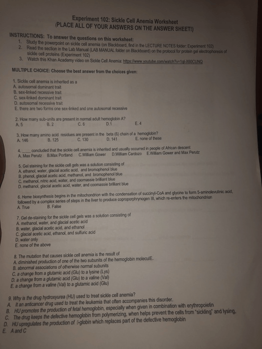 Solved  Experiment 102  Sickle Cell Anemia Worksheet Place