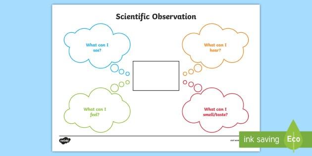 Scientific Observations Worksheet   Worksheet