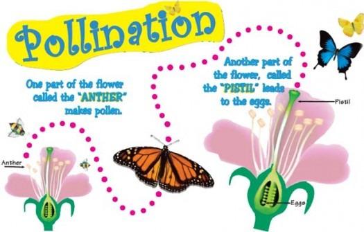 Pollination And Fertilization Of Plants Worksheet