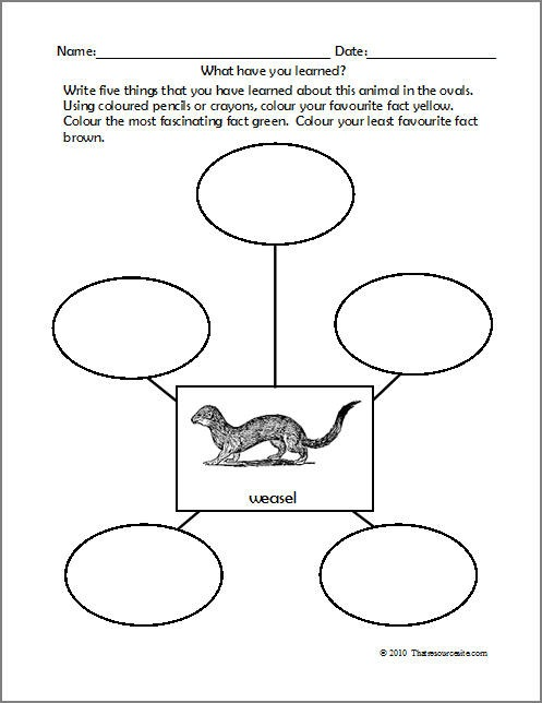 Basic Needs Of Animals Worksheets  Best Images Of Plant Needs