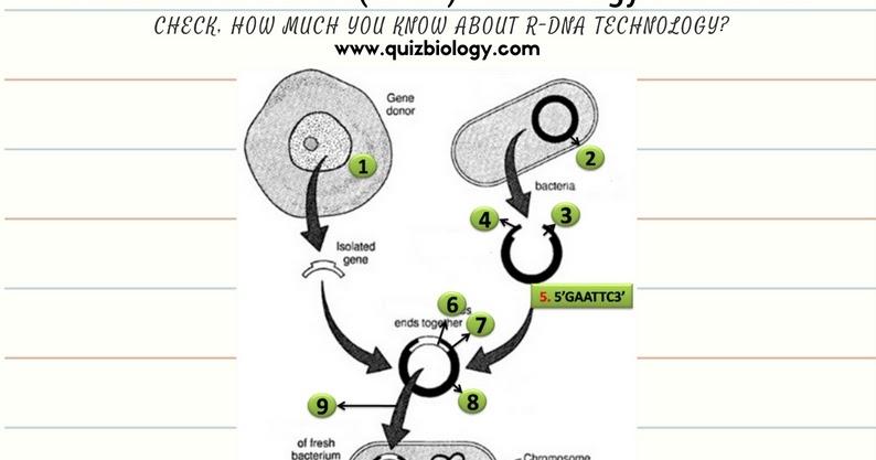 Biology Exams 4 U  Recombinant Dna Technology Worksheet Pdf