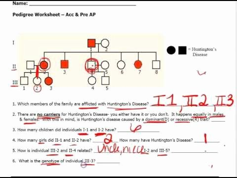 Sickle Cell Anemia Pedigree Worksheet