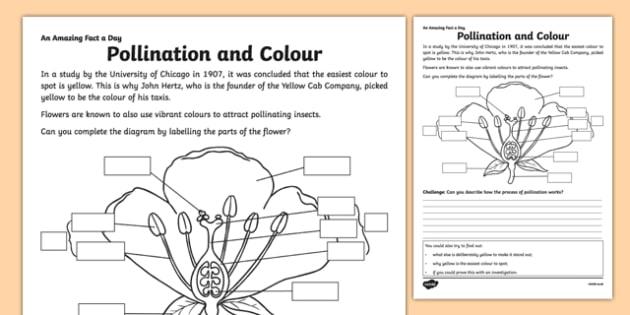 Pollination And Colour Worksheet   Worksheet
