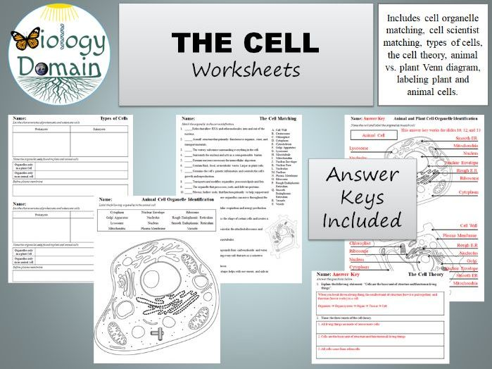 The Cell Worksheets By Biologydomain
