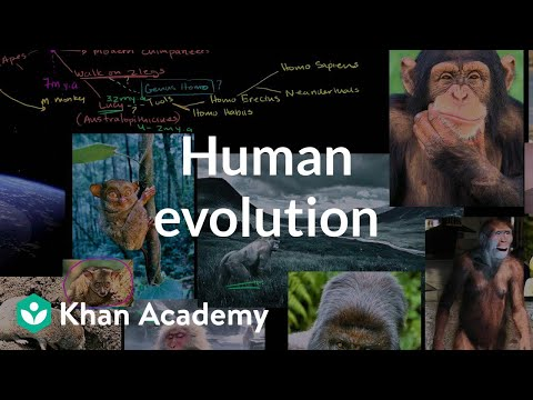 Human Evolution Overview (video)