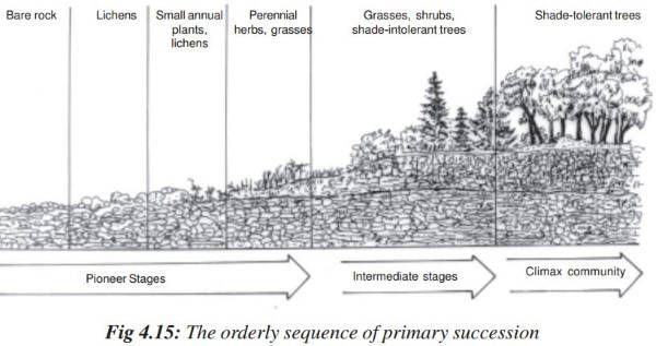 Ecological Succession – Primary & Secondary Succession