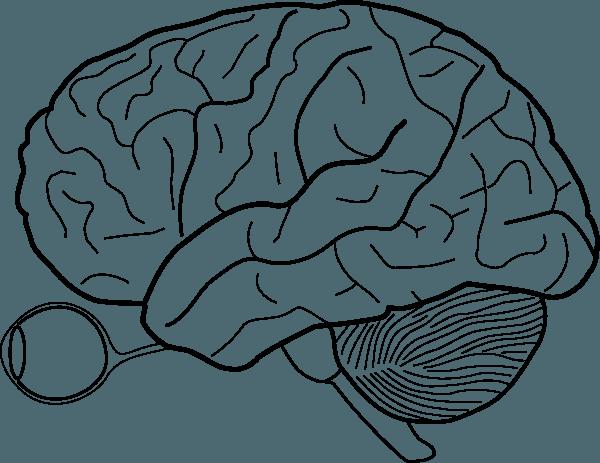 Free Printable Blank Brain, Download Free Clip Art, Free Clip Art