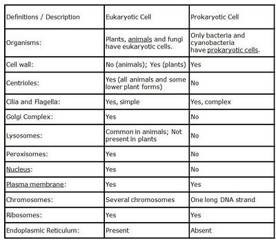 The Differences Between Prokaryotic Cells And Eukaryotic Cells