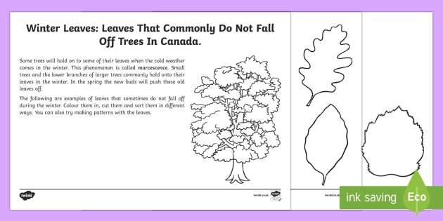 Sorting Leaves Worksheet   Worksheet