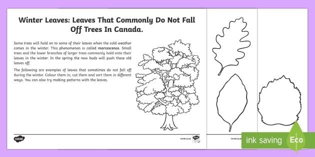 Sorting Leaves Worksheet   Worksheet