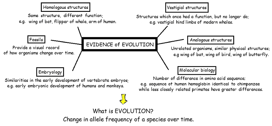 Topic 5 1 Evidence For Evolution