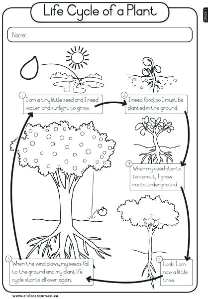 Plant Life Cycles Worksheets – Odmartlifestyle Com