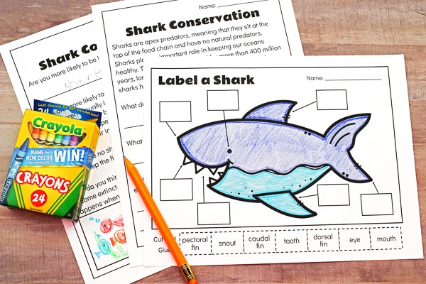 3 Free Printable Shark Worksheets To Teach Kids