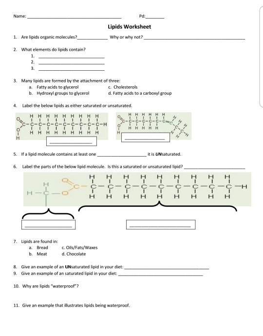 Solved  Name  Pd  Lipids Worksheet 1  Are Lipids Organic M