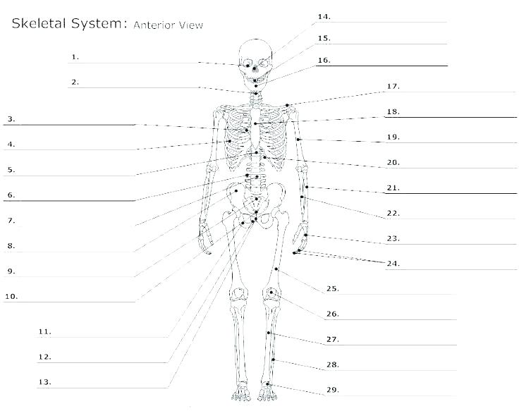 Muscle Fill In The Blank Worksheets Human Anatomy Labeling