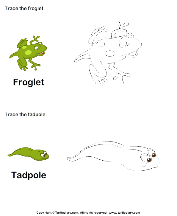 Stages Of A Frog Life Cycle For Kids Worksheet