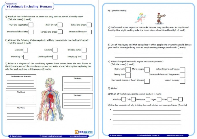Year 6 Science Assessment Worksheet With Answers – Humans