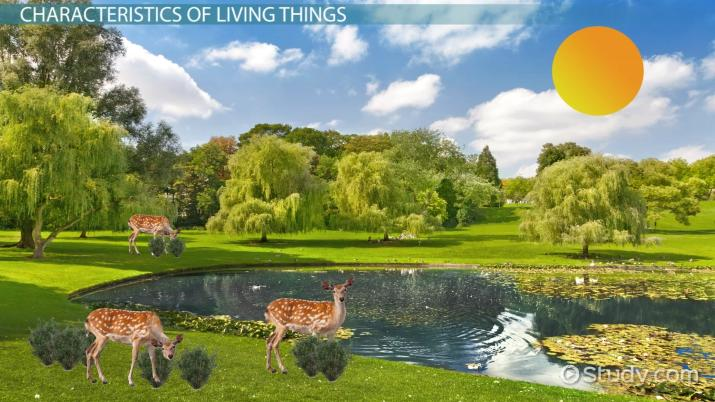 Characteristics Of Living Things Video With Lesson Transcript
